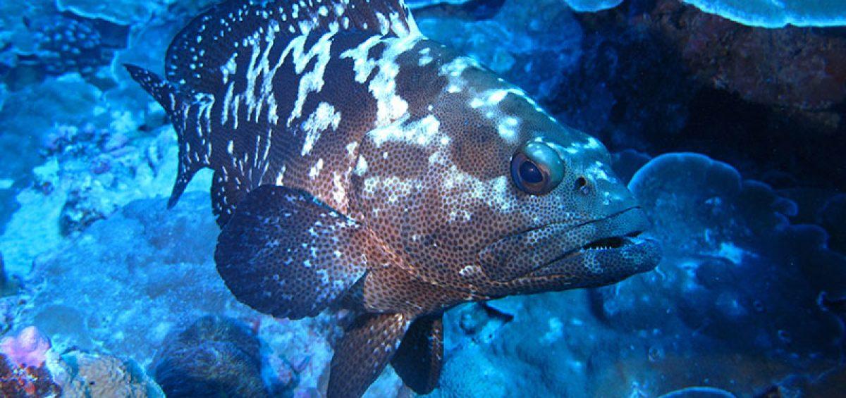 Expanding-ADMCF-Marine-Conservation-beyond-Sharks_800x500