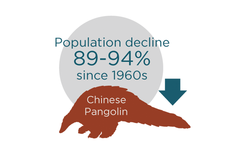 Wildlife_Pangolin-graphic3