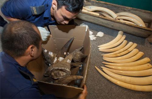 wildlife-trade2