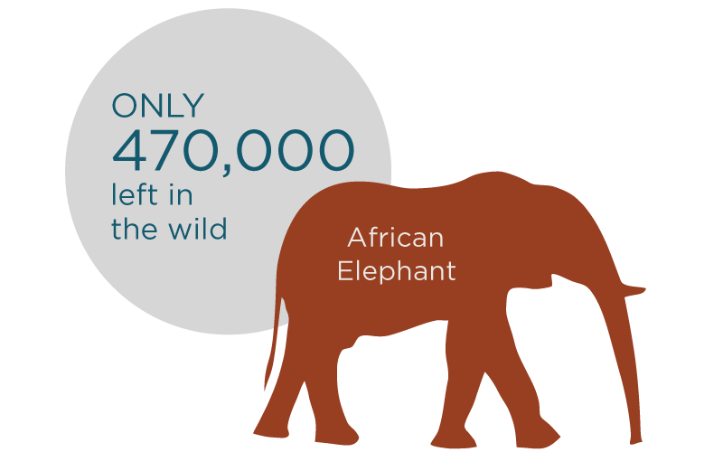 wildlife_african-elephant-graphic