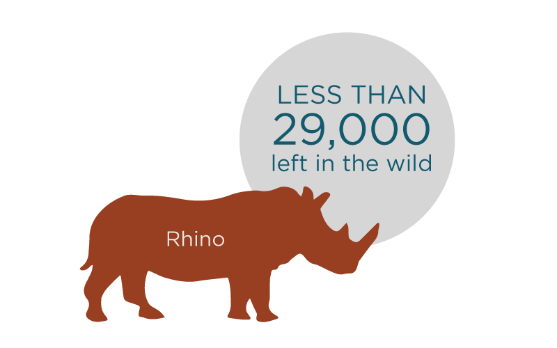 wildlife_rhino-graphic